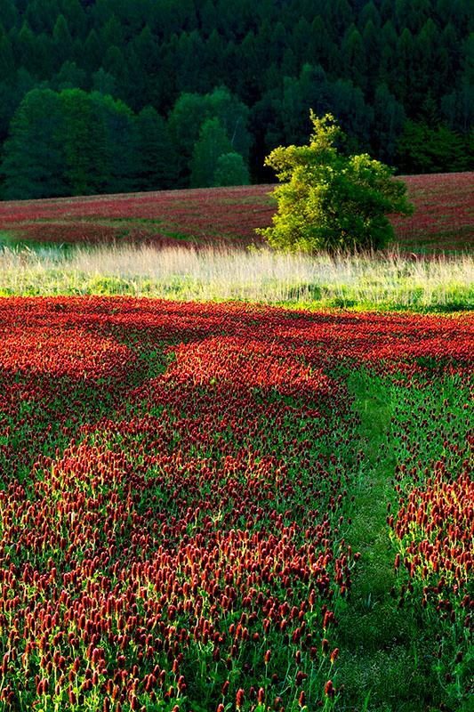 cesta rudým mořem - Ivan Anderle